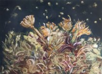 Image of Andres, David - NOCTURNAL: FLOWERS OF THE SEA