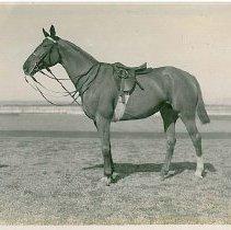 Image of 1900.62.05-217 - Print, Photographic