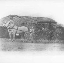 Image of Marion Jones, Georgina Jones and Mary Jones in Horse-Drawn Carriage - undated