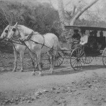 Image of Georgina Jones, Marion Jones and Mary Jones in Horse-Drawn Carriage - undated