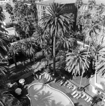 Image of The Swimming Pool at the Miramar Hotel  Miramar Hotel Swimming Pool, Santa Monica - undated