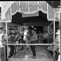 Image of Publicity Event  with Horse at Henshey's Department Store - 1940/07/25