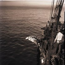 Image of Last Whale Hunt Off Santa Monica, 1936 - 1936/01/22