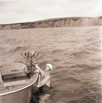 Image of Capturing a Lobster in Santa Monica Bay - 1941/07/24