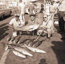 Image of White Sea Bass Catch, Santa Monica Pier - 1960