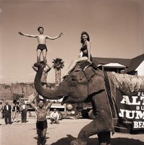 Image of Emma the Elephant at Muscle Beach, 1950 - 1950/03/14
