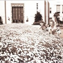 Image of Women Pick Margarita Flowers Outside City Hall, 1943 - 1943/05/14