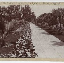 Image of Lilies and Palms - undated