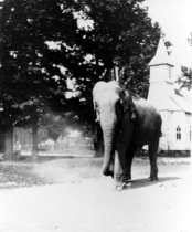 Image of Elephant in Parade