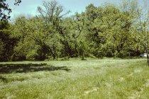 Image of 1997.045.009 - Transparency, Slide