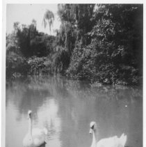 Image of Photo Archives - A_9_e_008