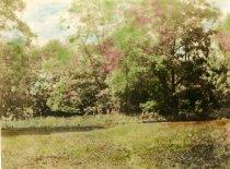 Image of 00048.96 - Location where Cedar Grove Mill stood