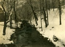 Image of Valley of Cobbs Creek