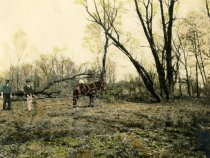 Image of 00085.165 - Early Spring Work