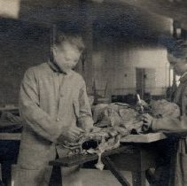 Image of Postcard dipicting two men dissecting a cadaver.