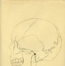 Image of Skull Contour Drawings - Contour drawings of different angles of the human skull. Also includes two partially toned drawings and one reprint from Warren's Handbook of Anatomy. Preparatory work from Warren's Handbook of Anatomy - The Skull pages 4,5, and 10. 17 pieces.
