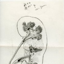 Image of Mounted single kidney - Ink and graphite kidney mounted on matte board. 3 pieces.