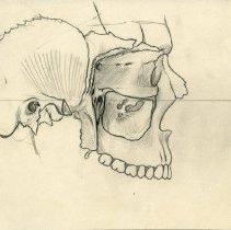 Image of Bones of the Skull - 2009.017.003