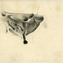 Image of The Sinuses - Graphite and colored pencil renderings of the sinuses. Preparatory work for Warren's Handbook of Anatomy - section titled The Nose. Page 98-100. 13 pieces.