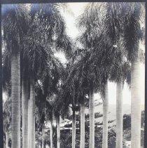 Image of Arthur E. Elder Photo Album IV, VP 54, 1943 - Album, Photograph
