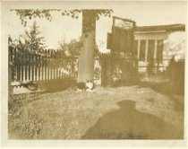Image of Folder 13 - Cat outside house