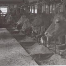 Image of Print, Photographic - Milkmor Modern Dairy Barn