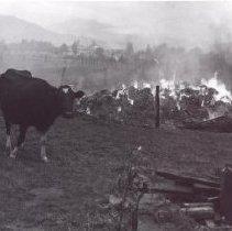 Image of Print, Photographic - Stevenson Road barn fire