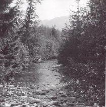 Image of Print, Photographic - Qualicum Park and River