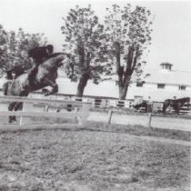 Image of Print, Photographic - Show Jumper