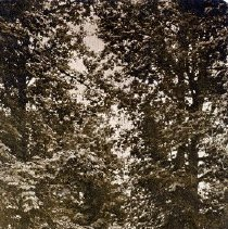Image of Print, Photographic - View of a tree shaded country road