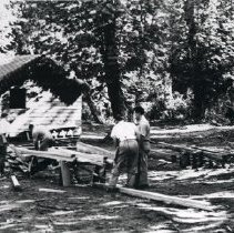 Image of Print, Photographic - View of work crew building cabins at the United Church camp at Cultus Lake.