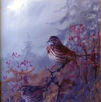 Image of Print, Photographic - Sooty Song Sparrows