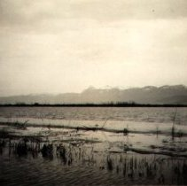 Image of Print, Photographic - View of Sumas Prairie under water during 1935 flood
