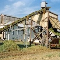 Image of Print, Photographic - View of large conveyor loading shredded hop vines and leaves into spreader wagon for use as fertilizer.