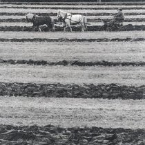 Image of Print, Photographic - Ploughing with  Horses