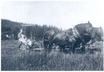 Image of PO.014.0009 - Hans Nelson plowing family farm in Fall City with two horse team.  Man seated on plow with two horse team pulling plow.  Dark color horses, wearing blinders, side view showing full harness assembly.  Young man wearing cap, light colored overalls, dark shirt with sleeves rolled up above elbows, holds reins in hands.  Plow has wide metal wheels with caulks, metal spokes, tall handle attached to gear mechanism on left wheel.  Scene in field of tall grass in foreground, rest of field in background is cut.  Roof of farmhouse in left distance at foot of tree-covered ridge.