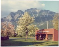 Image of PO.316.0001 - Museum Farm Shed and Mount Si.  Japanese Cherry Blossoms, white dogwood tree, North Bend Museum Farm Shed.