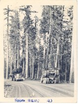 Image of PO.989.0009 - North Bend, '43. Logging trucks on a road near North Bend.
