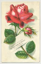 Image of 074.1045.d. Rose Postcard. Rich And Silber Co Ad.1