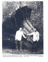 Image of PO.008.0103.1 - Rocky Orr and Dennis Johnson with huge stump.