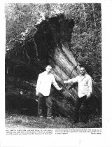 Image of PO.008.0103.2 - Rocky Orr and Dennis Johnson with huge stump.