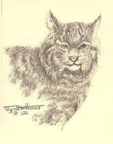 Image of Bobcat