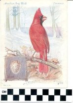 Image of American Song Birds Trade Cards