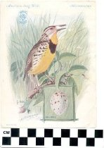 Image of American Song Birds Trade Card