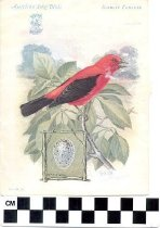 Image of American Song Bird Trade Cards