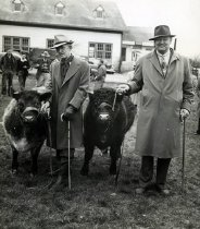 Image of Livestock Judging - Unknown