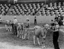 Image of NACTA Livestock Judging - Unknown