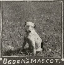 Image of Ogden College Mascot - Cardinal