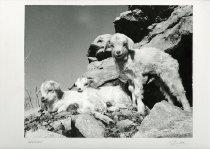 Image of Babies [Goats]