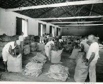 Image of Packing Dried Beef In Bahia, Brazil